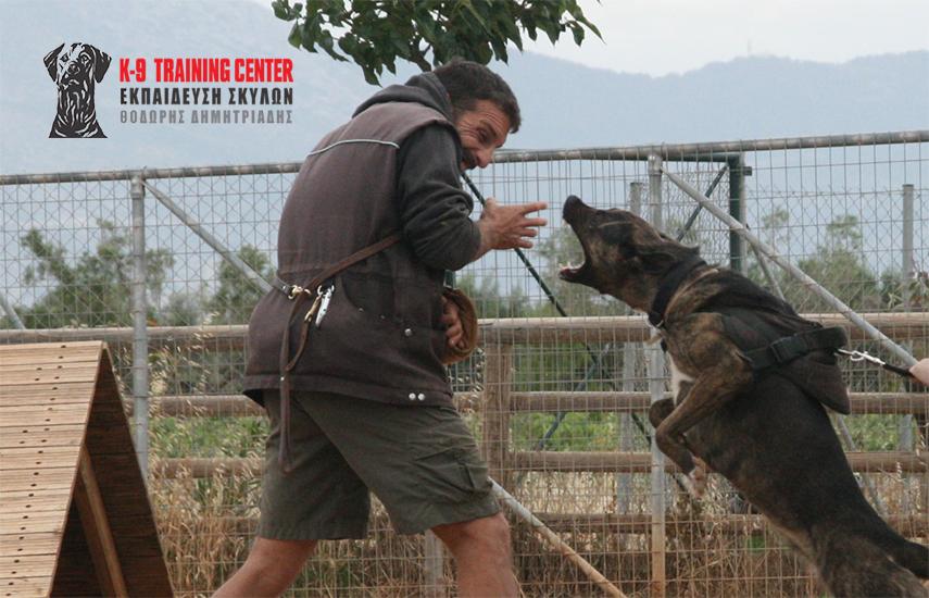 335€ από 558€ για Εκπαίδευση Σκύλου - Μικρό Πρόγραμμα Σωματοφυλακής (14 μαθήματα), στο εκπαιδευτήριο σκύλων ''K9 Training Center'' στην Παιανία εικόνα