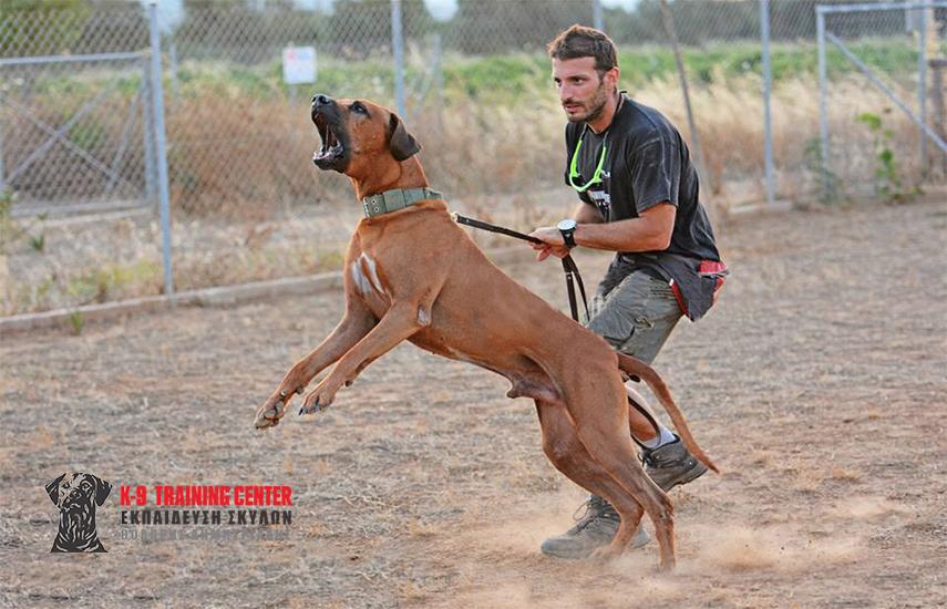 559€ από 930€ για Εκπαίδευση Σκύλου - Μεγάλο Πρόγραμμα Σωματοφυλακής (20 μαθήματα), στο εκπαιδευτήριο σκύλων ''K9 Training Center'' στην Παιανία εικόνα