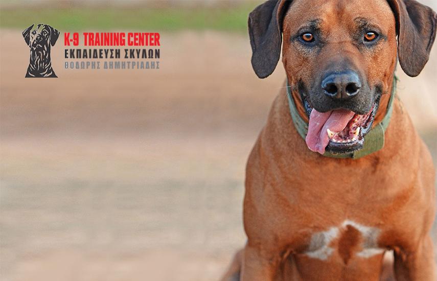 559€ από 930€ για Εκπαίδευση Σκύλου - Mεγάλο Πρόγραμμα Υπακοής (20 μαθήματα + 2 μήνες συντήρηση), στο εκπαιδευτήριο σκύλων ''K9 Training Center'' στην Παιανία εικόνα