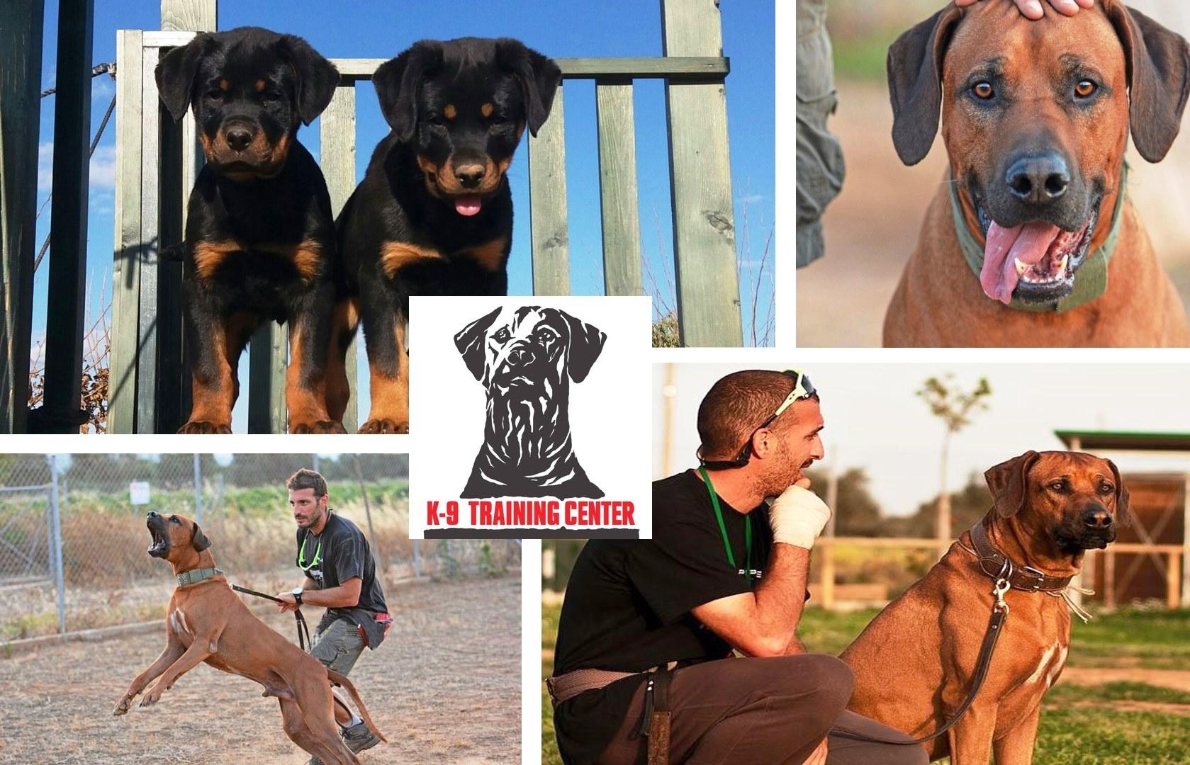 40% Έκπτωση για Πρόγραμμα Εκπαίδευσης Σκύλου (Υπακοή ή Σωματοφυλακή) ή Εκπαιδευτική Διαμονή, στο ''K9 Training Center'' στην Παιανία