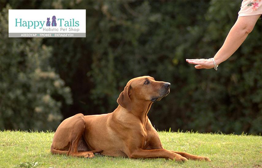 Από 360€ (40% Έκπτωση) για Εκπαίδευση Σκύλου ΚΑΤ'ΟΙΚΟΝ (πρόγραμμα Υπακοής & Προεκπαίδευση Κουταβιών)