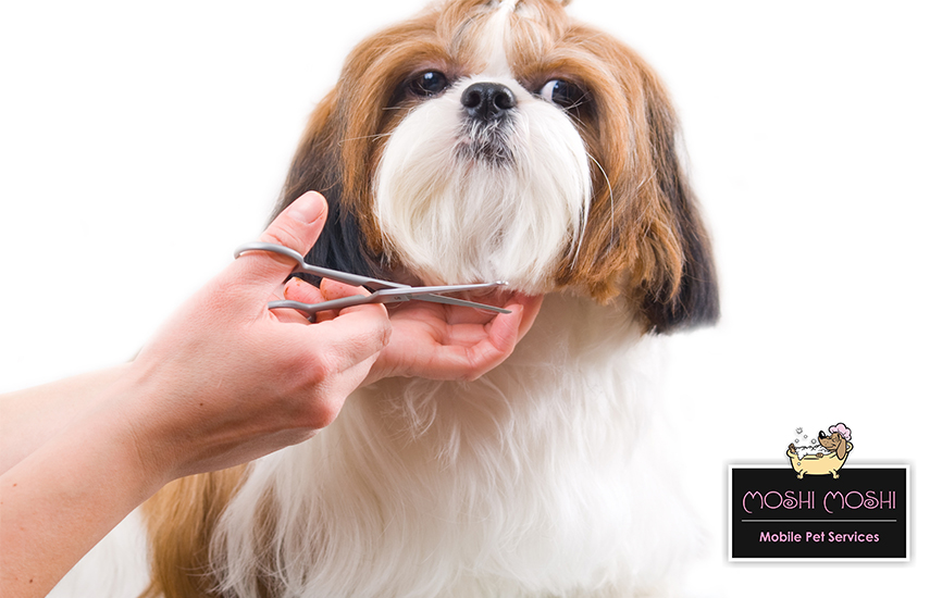Aπό 20€ για Πλήρες Πακέτο Καλλωπισμού & Κουρέματος Σκύλου (Grooming) ΣΤΟ ΧΩΡΟ ΣΑΣ, από το ''Moshi Moshi - Mobile Pet Services'' εικόνα
