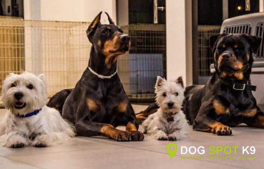 Aπό 30€ για Ολοκληρωμένο Πρόγραμμα Eκπαίδευσης Σκύλου, με απεριόριστο αριθμό μαθημάτων, από την Ακαδημία Εκπαίδευσης Σκύλων ''Dog Spot K9'', στα Καλύβια