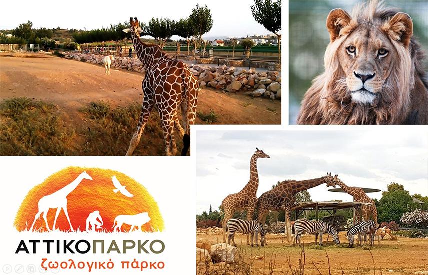 Αττικό Ζωολογικό Πάρκο: 4 Μοναδικές Προσφορές για όλη την οικογένεια (Απλή ή Οικογενειακή Είσοδος) στο μεγαλύτερο πάρκο της Χώρας