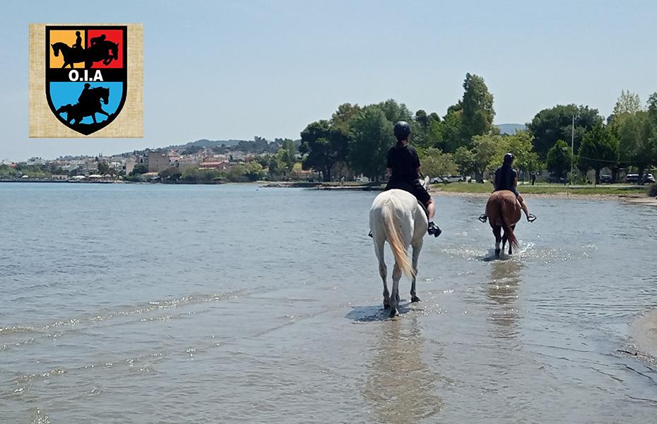 60€ από 110€ για 1 αξέχαστη βόλτα με άλογο στη θάλασσα, διάρκειας 1 ώρας, μαζί με φωτογράφηση, Μια ξεχωριστή εμπειρία με άλογο στη θάλασσα, από τον ''Όμιλο Ιππικής Αντοχής'', στην Αυλώνα